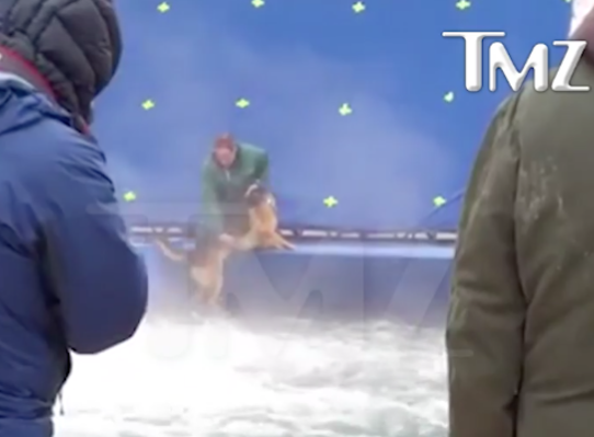How Hollywood Ensures the Safety of Animals